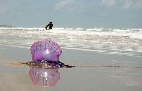 Se nos vino el alma al cuerpo   Levantan medida de cierre por Fragata Portuguesa en playa Cavancha