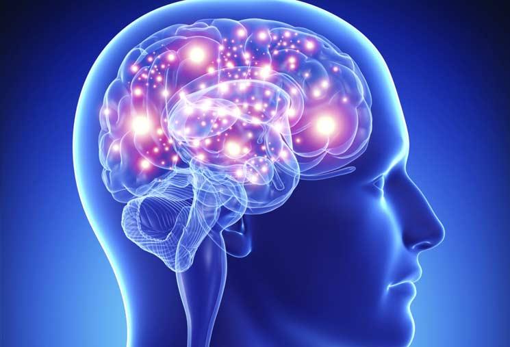 El nuevo mapa del cerebro: algunos mitos y realidades | Columna Dr. Franco Lotito C.