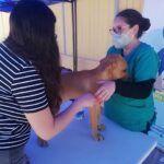 Para alegría de Firulais y Michis | Volvió «Veterinario en Terreno» de la Gobernación del Tamarugal