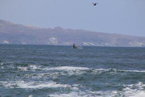 Iquique | Avistan ballenas en el sector Buque Varado